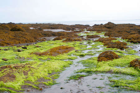brightness: bright colored green seaweed, brightness caused where fresh water flowed over salty seaweed  Stock Photo