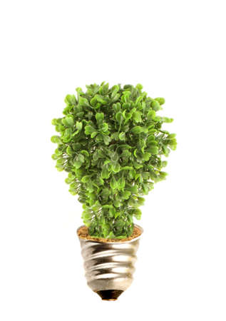 Tree in lightbulb socket symbolizing ecology and eco environmental friendly energy Stock Photo - 4915586
