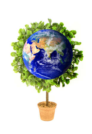 A planet  earth  growing tree or plant symbolizing environmental concerns and ecology Stock Photo - 4924521