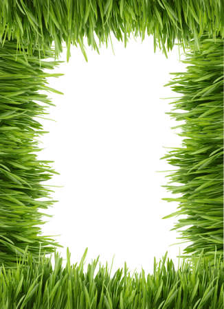 grassy: A frame or border of long green grass with a white background Stock Photo