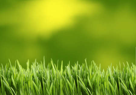 Green and yellow grass background great for scrapbooking Stock Photo