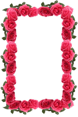 garden frame: Pretty pink rose border or frame great for a background