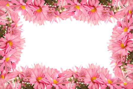 border flowers: Pretty feminine pink daisy border or frame on a white background