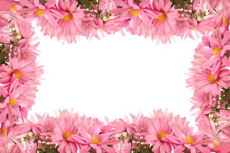Vrij vrouwelijke roze daisy grens of frame op een witte achtergrond Stockfoto