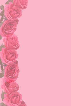 Faded pink rose background with copyspace great for a border or background