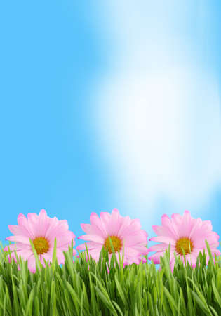 Green grass and pink daisy background great for scrapbooking with copy space in blue sky photo