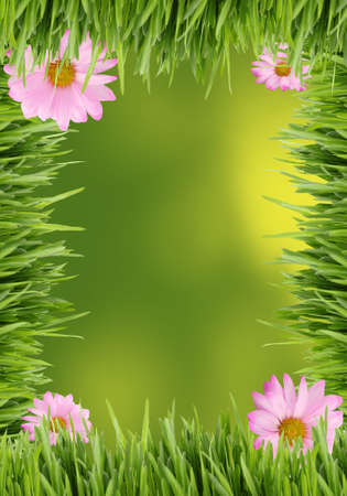 Green grass and pink daisy background border great for scrapbooking with copy space Stock Photo - 7034404