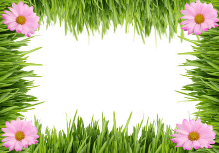 Green grass and pink daisy background great for scrapbooking with copy space on white Archivio Fotografico