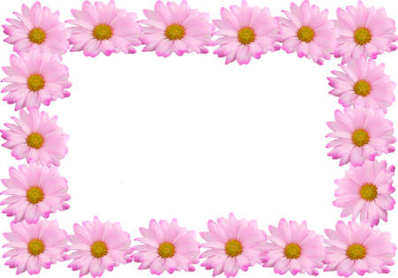backgrounds: Border or frame made of pink daisies on a white background Stock Photo