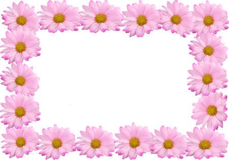Grens of frame gemaakt van roze margrieten op een witte achtergrond