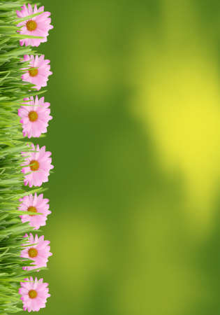 Green grass and pink daisy frame background great for scrapbooking and stationary