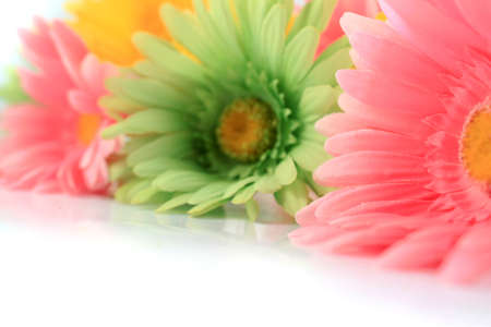 Colorful gerbera daisies on a white background with copyspace photo