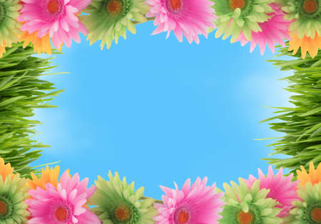 Pretty colorful gerber daisy and grass border or  frame with spring colors on blue sky background Imagens