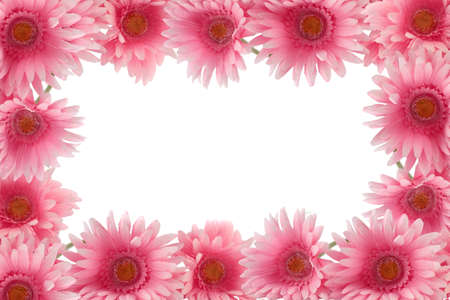 Pretty colorful gerber daisy border or  frame with spring colors on white background photo