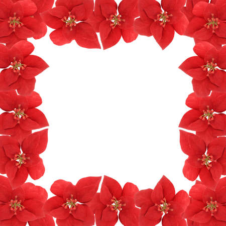Poinsetta flower square border or frame on a white background for scrapbooking photo