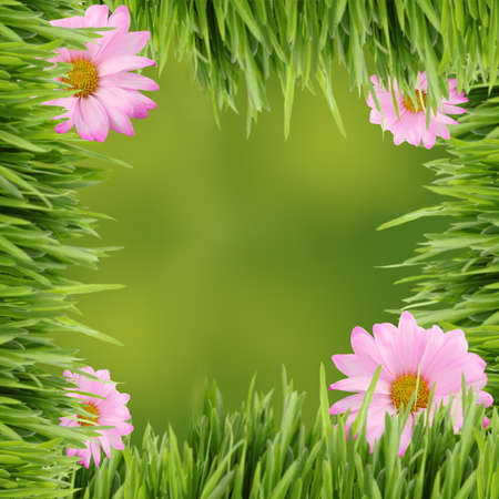 Pink daisies on tall grass border  with green spring background in square format for scrapbooking photo