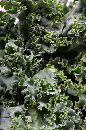 nutritional: Close up of fresh green leafy kale  Stock Photo