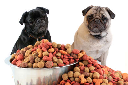 Black and beige pug dogs sitting in front of overflowing  food bowl filled with morsels