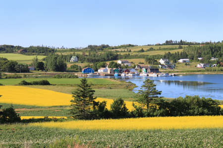 edward: Summer landscape with rapeseed fields and fishing pier with boats  in central Prince Edward Island, Canada