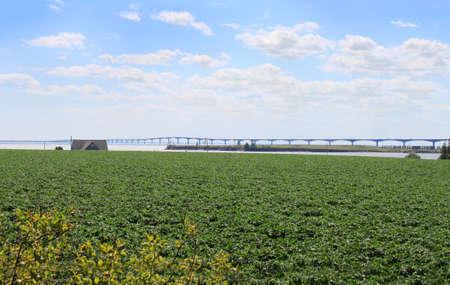confederation: Prince Edward Island potato field with Confederation Bridge in the background