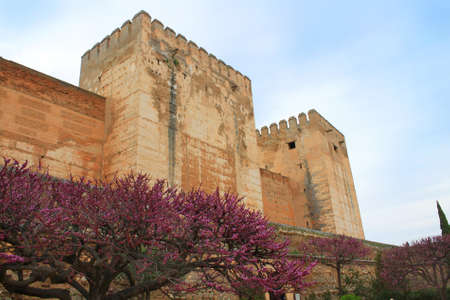 View of sprintime blossoms near the Medieval Alcabaza in the Alhambra, Granada, Spain