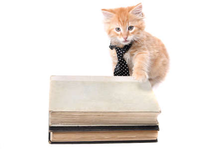Little orange striped kitten wearing a tie with his paw on some text books