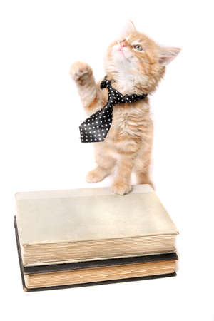 Little orange striped kitten wearing a tie with his paw on some text books looking up