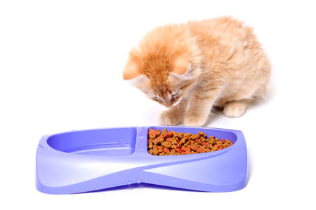 suppertime: Orange and white striped kitten looking at food morsels  in purple dish, contemplating eating it. Stock Photo