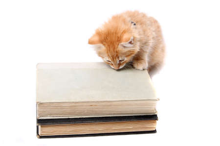 Little orange striped kitten  with his paws on some text books, and sniffing