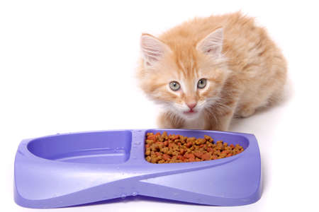 suppertime: Orange and white striped kitten eating food morsels out of dish. Stock Photo
