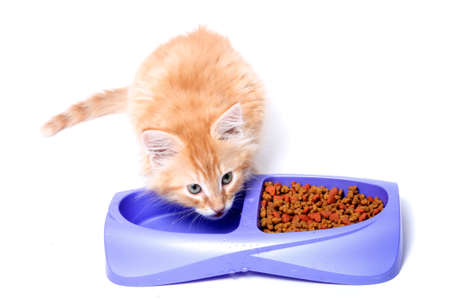suppertime: Orange and white striped kitten drinking water  out of dish