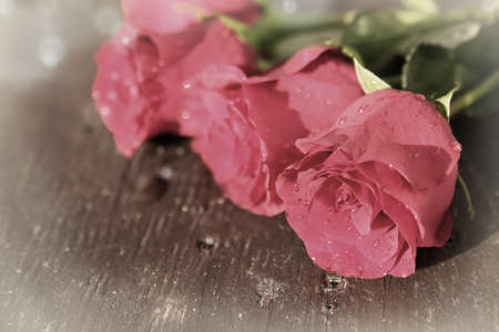 vignette: Vintage looking pretty pink fresh cut roses with bokeh and vignette Stock Photo