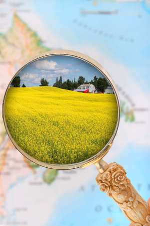 rappi: Looking in on rapeseed field in Atlantic Canada with blurred map in the background