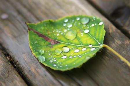 kropla deszczu: Upadły liści mokre na drewnianym tle z naciskiem na deszczowych kropli Zdjęcie Seryjne