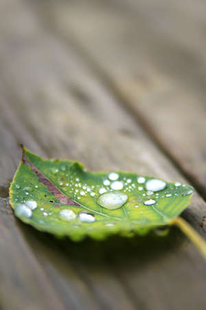 wet leaf: Fallen wet leaf on wooden background with focus on rain drop Stock Photo