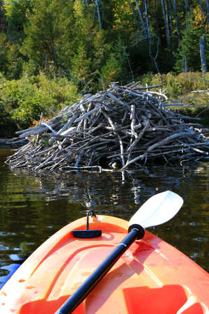 maritimes: Kayak on the Saint John River in early Autumn season with pile of wood for beaver dam in New Brunswick, The Maritimes in Canada. Focus on front of kayak Stock Photo