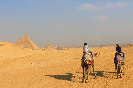 persona viajando: Pirámide de Giza, Egipto - 31 de enero, 2016: Mujeres montar camellos en las arenas del desierto de oro cerca de las pirámides de Giza en Egipto