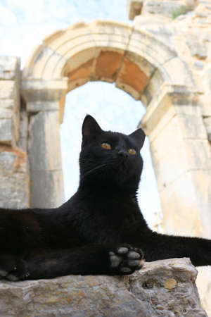 roman pillar: Black Cat sitting on a pillar in the Ancient City of Ephesus With Roman archway  in the background