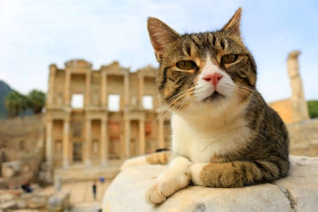 roman pillar: Cat sitting on a pillar in the Ancient City of Ephesus With Celsus  Library in the background Stock Photo