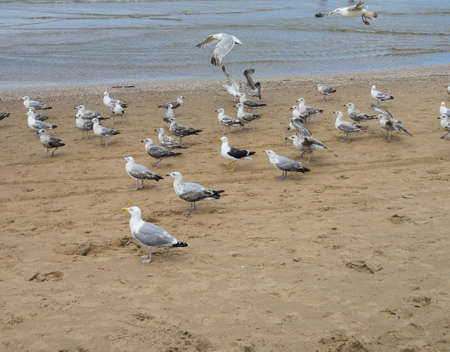 Photo of birds - beautiful seagulls filmed on a sandy sea coast