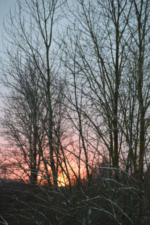 Photo of sunset through the trees, filmed in a winter time Stock Photo