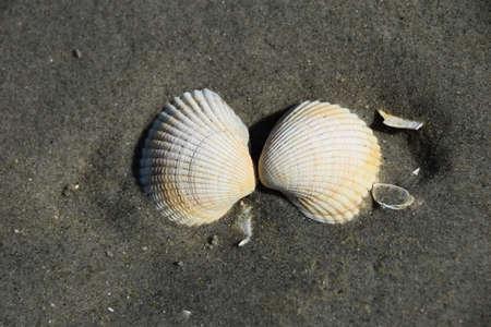Macro photo of beautiful mollusc shell, filmed on a sandy coast