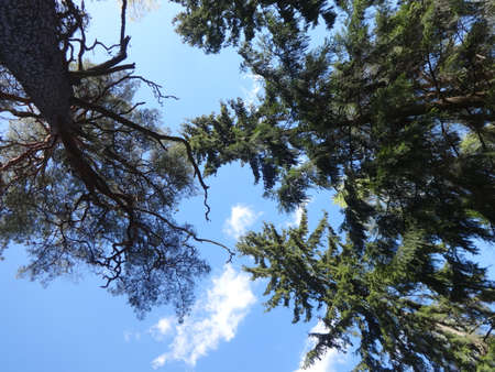 Photo of trees. View from the land to the skies. Filmed in a spring Stock Photo
