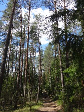 Photo of landscape, view on a forest. Filmed in a spring