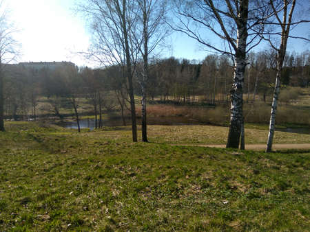 Photo of landscape, view on a trees. Filmed in a spring