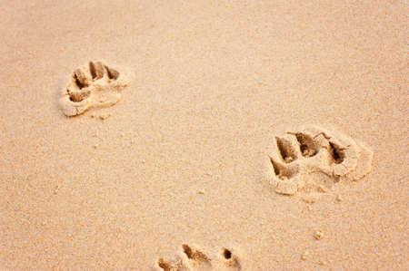 dog pawprints on the beach