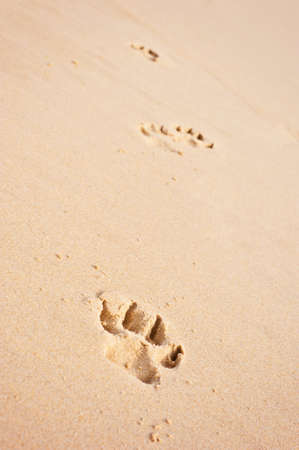 dog pawprints on the beach vertical photo