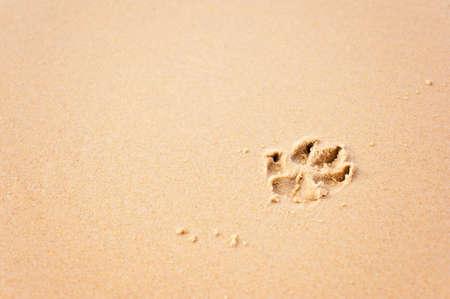 dog pawprint on the beach