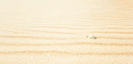 golden sand ripples with shell