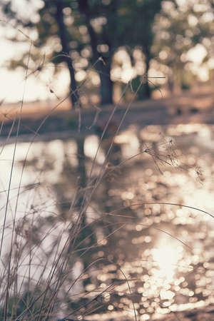 wild grass: hierba silvestre por una presa